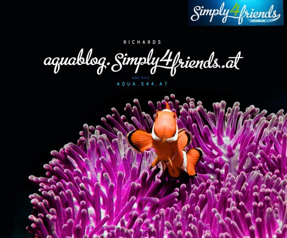2012 aquablog 01