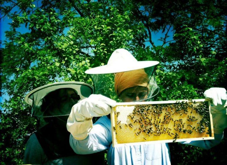 Honey 11