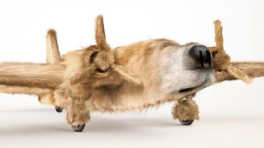 Dogfighter still 01