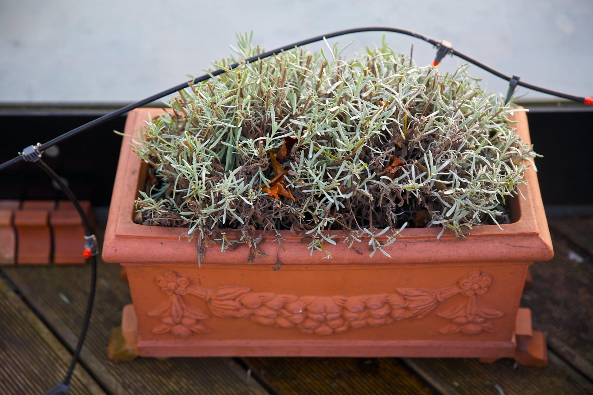 2014 terrasse entwintert 3