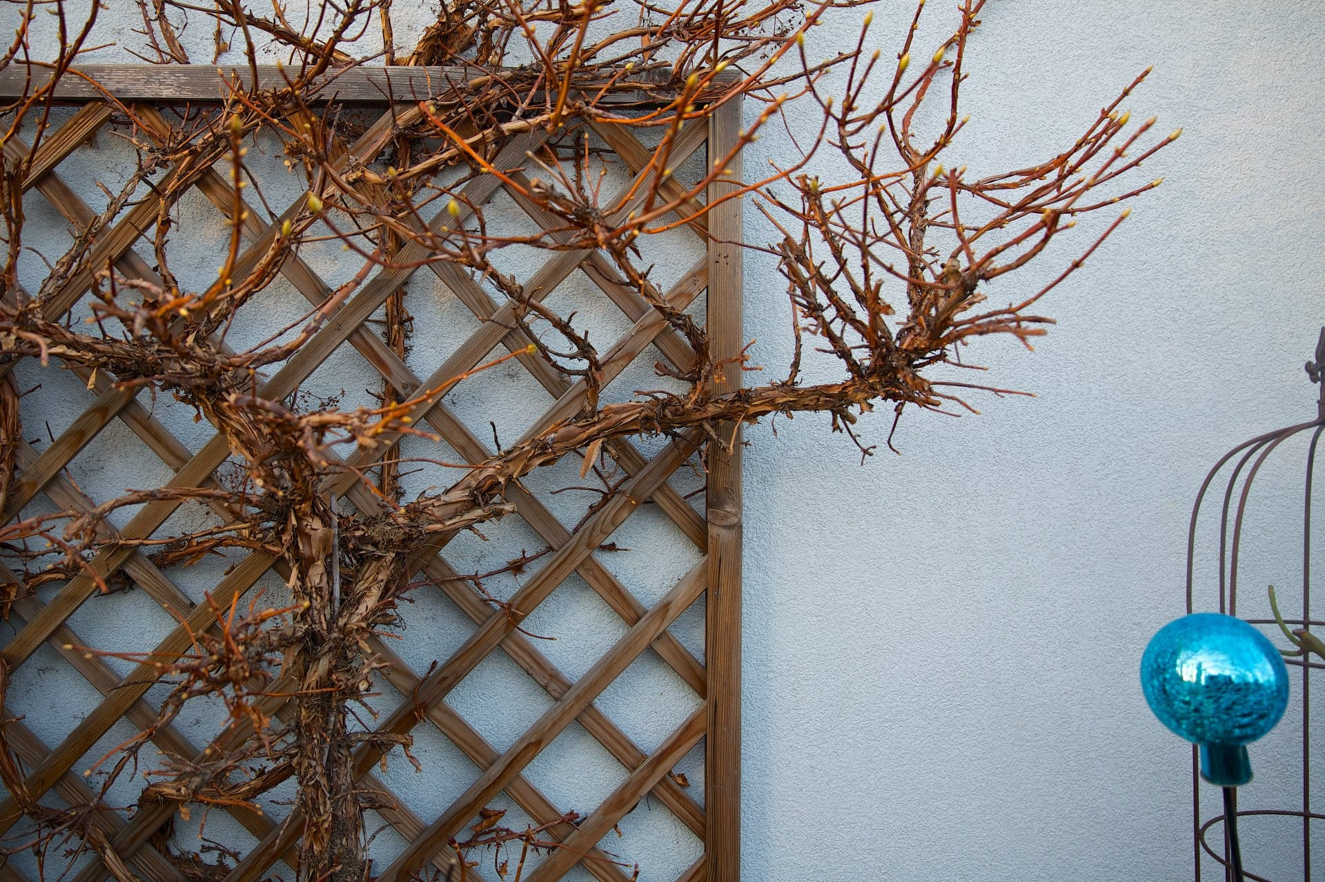 2014 terrasse entwintert 5