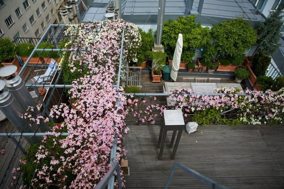 2014 terrasse blumenmeer 5