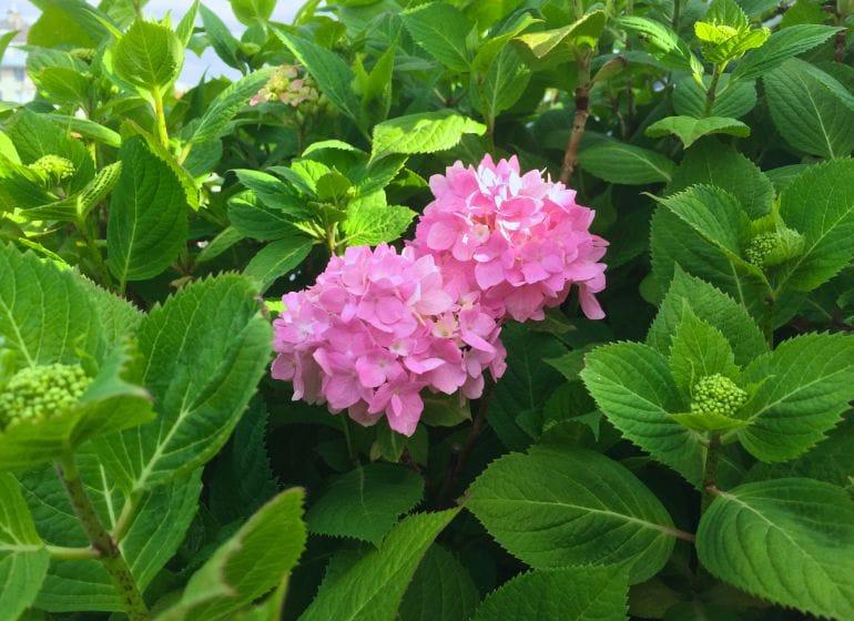 2015 05 06 flowerpower 10