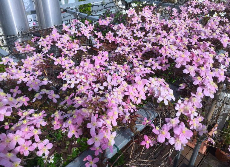 2015 05 06 flowerpower 14