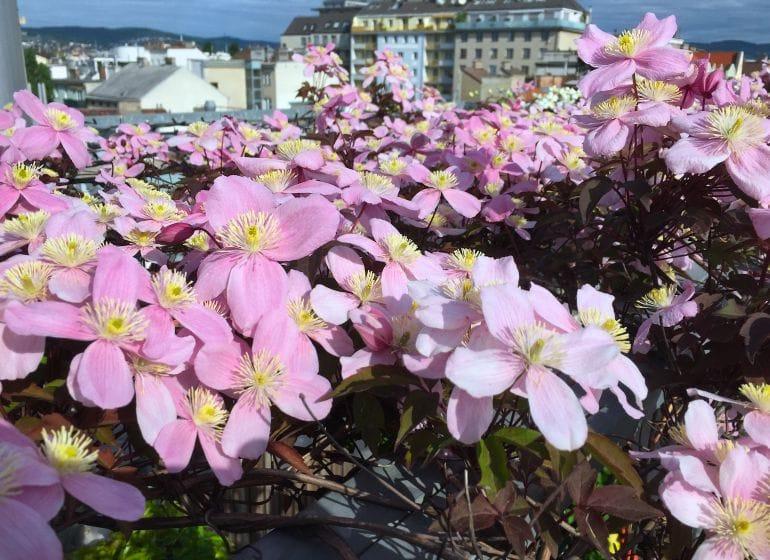 2015 05 06 flowerpower 17