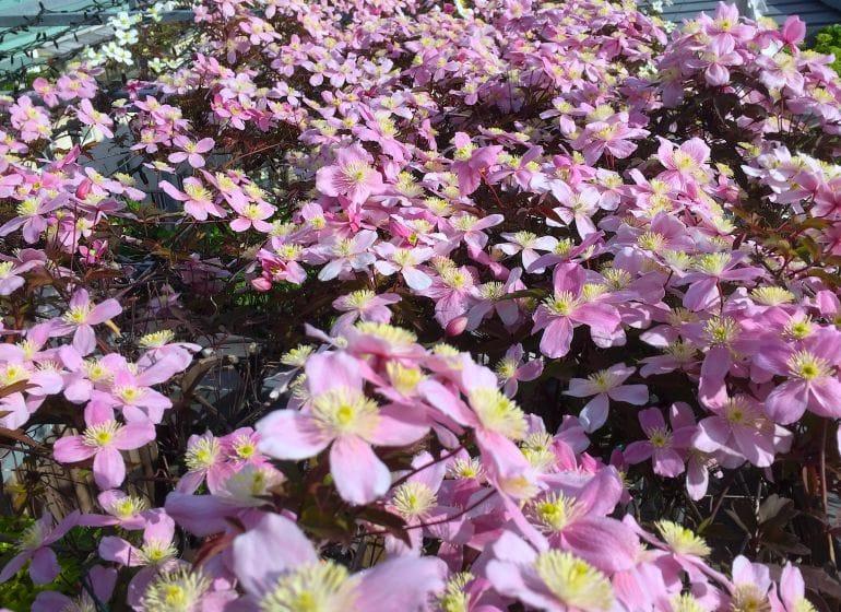2015 05 06 flowerpower 18