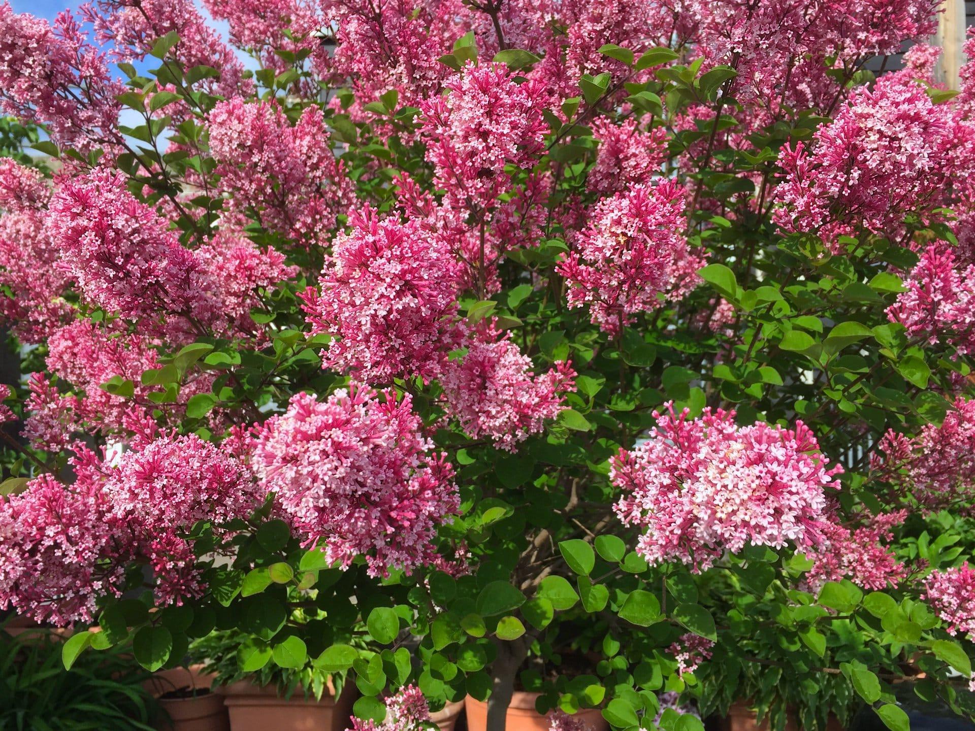 2015 05 06 flowerpower 1