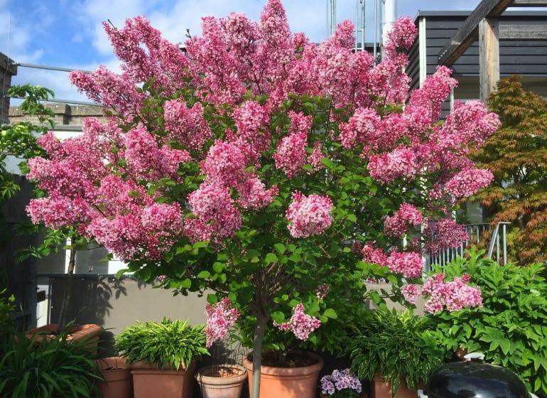 2015 05 06 flowerpower 2