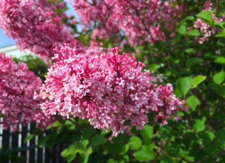 2015 05 06 flowerpower 3