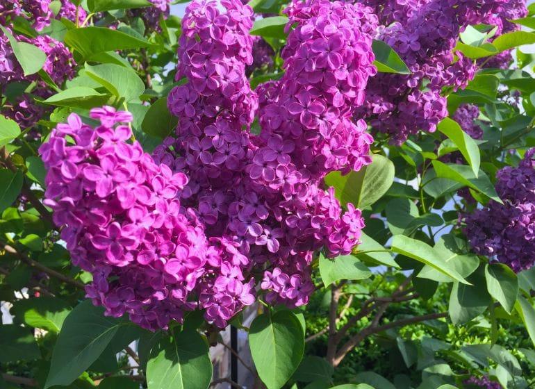 2015 05 06 flowerpower 8