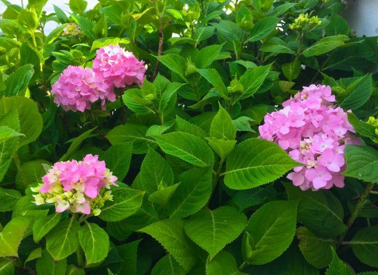 2015 05 06 flowerpower 9