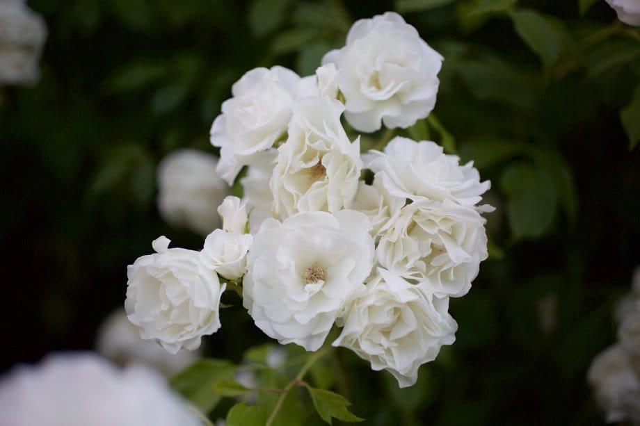 2015 06 07 flowervariety 11