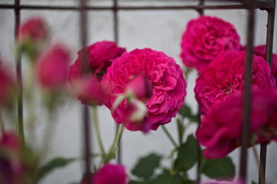 2015 06 07 flowervariety 13
