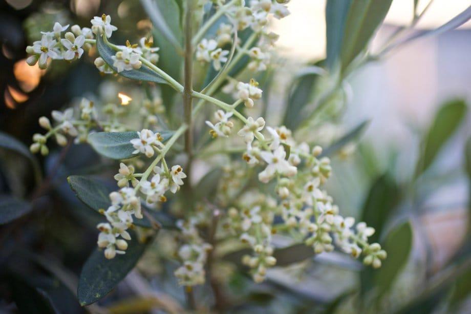 2015 06 07 flowervariety 16