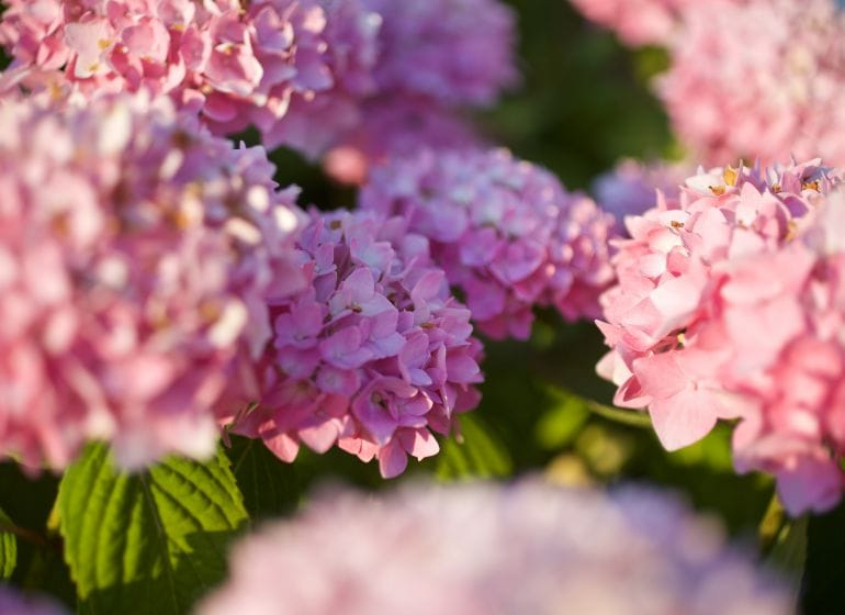 2015 06 07 flowervariety 2