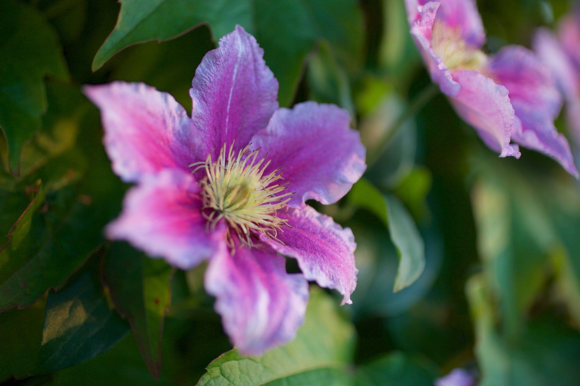 2015 06 07 flowervariety 3