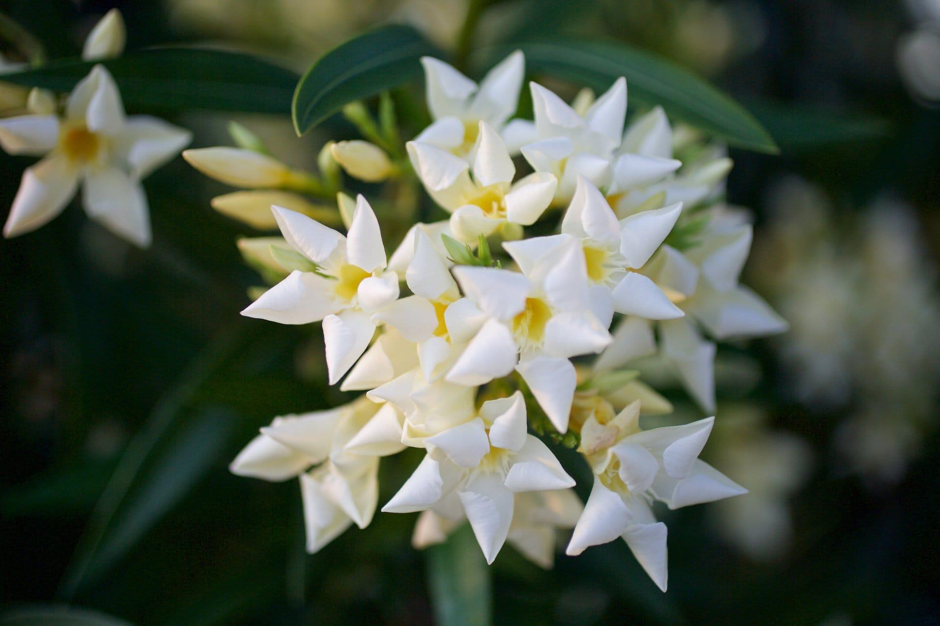 2015 06 07 flowervariety 5
