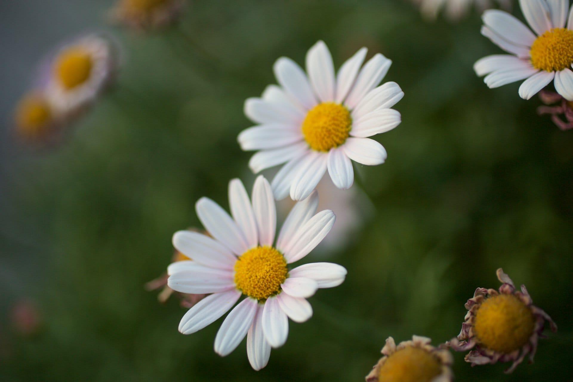 2015 06 07 flowervariety 6
