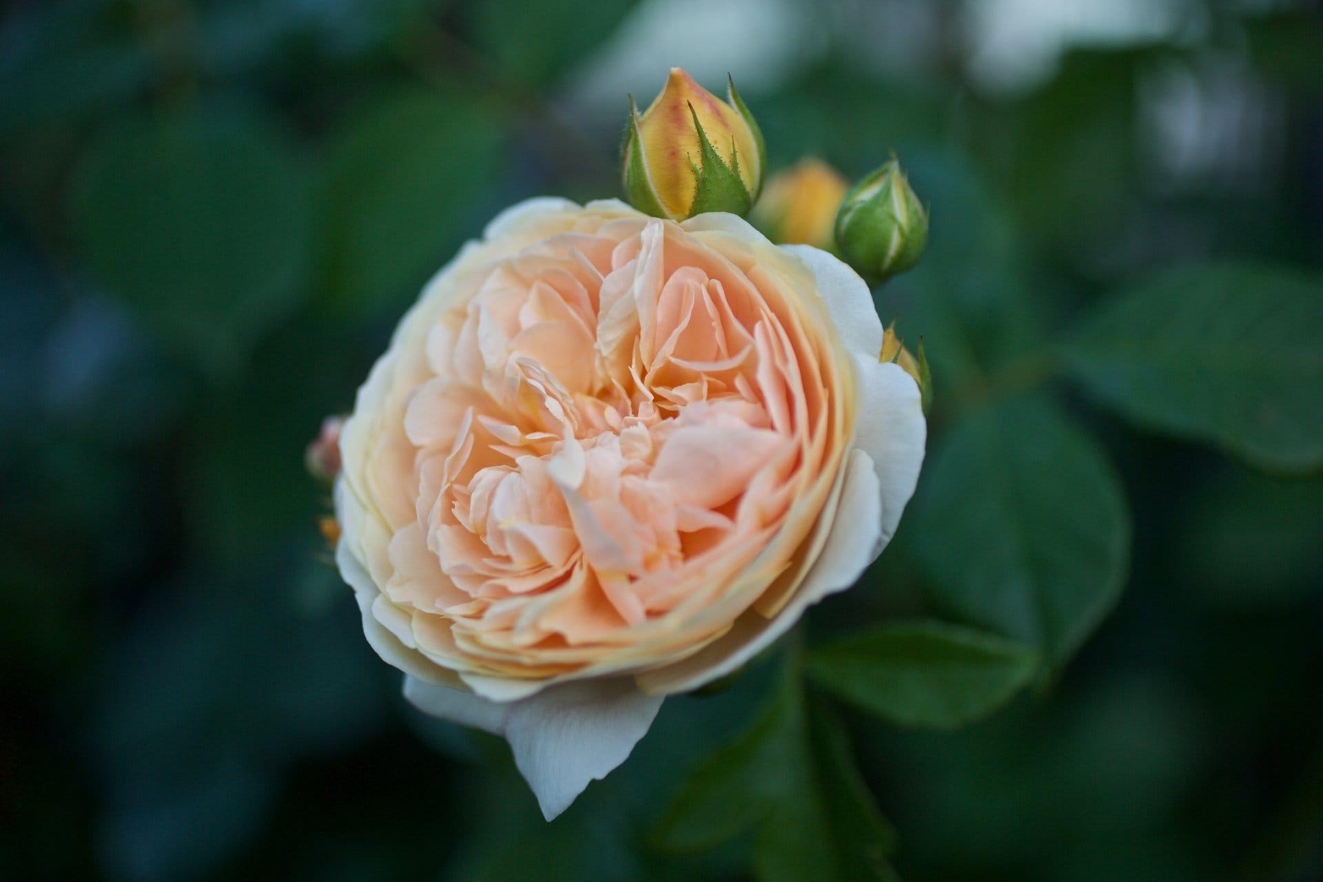 2015 06 07 flowervariety 7