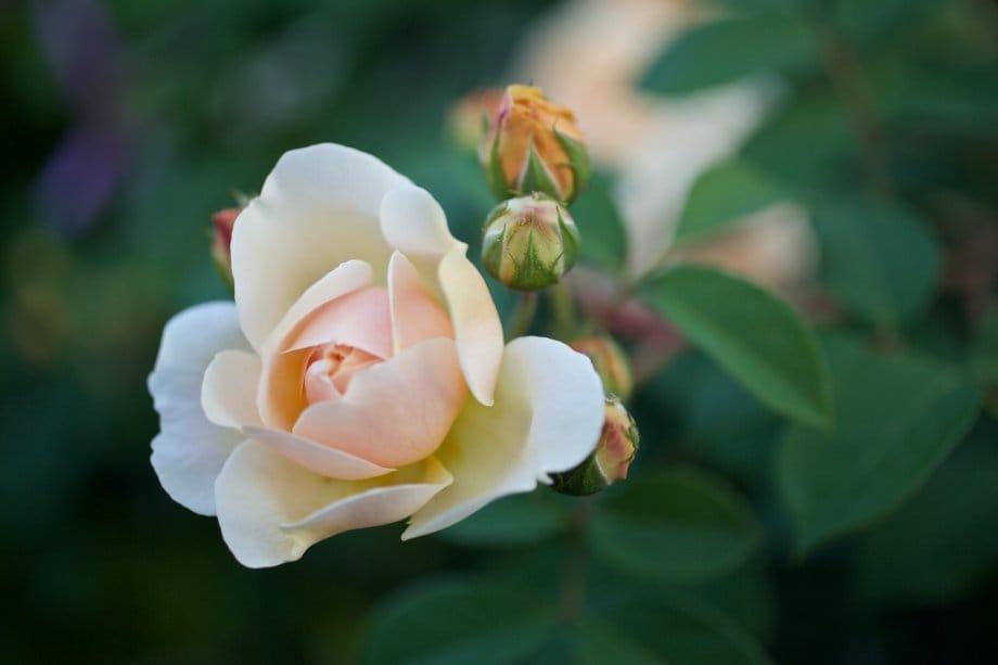 2015 06 07 flowervariety 8