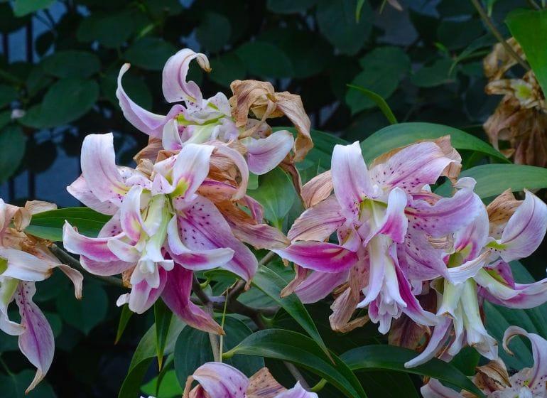 2015 07 23 fadingflowers 1