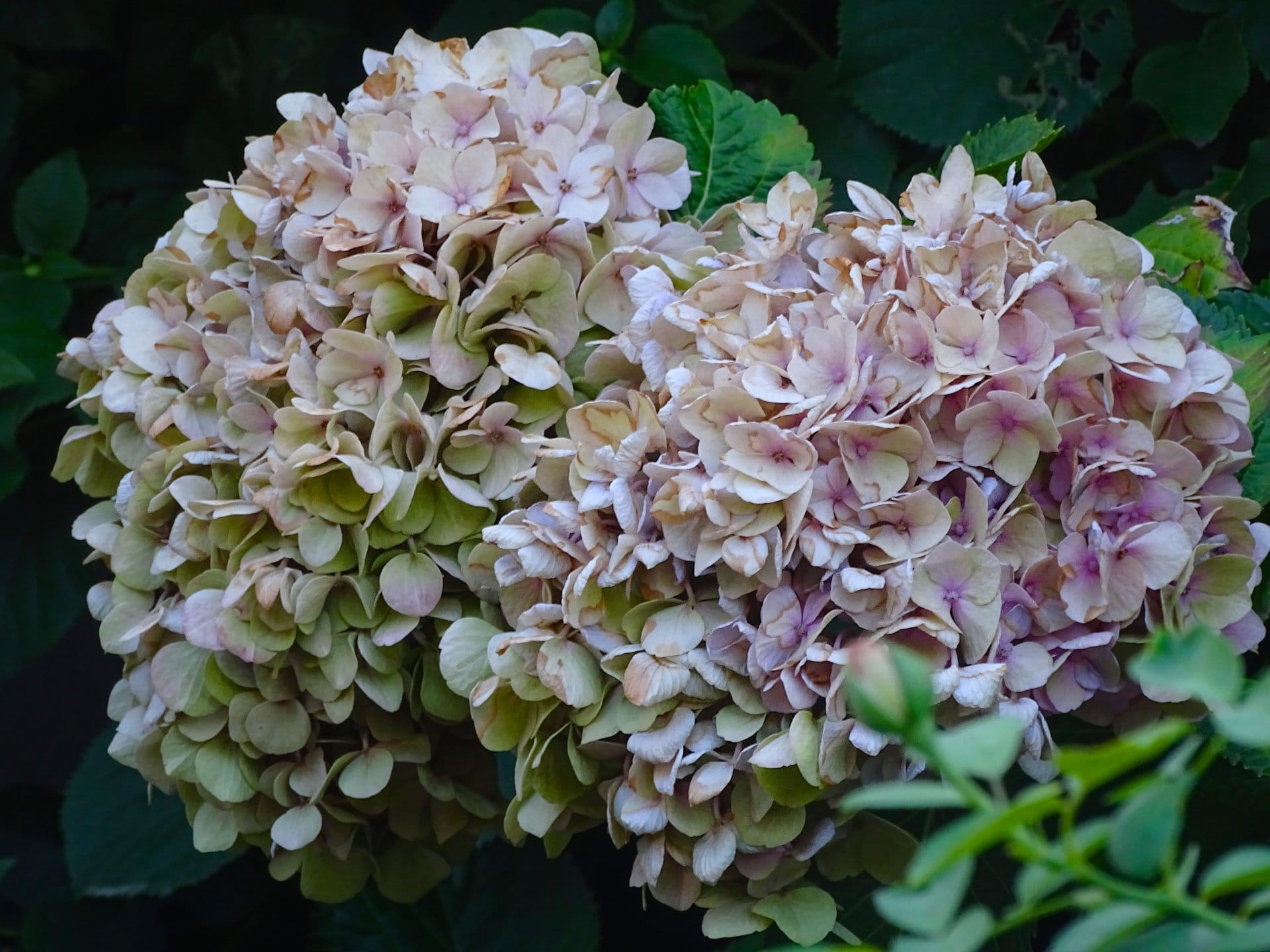2015 07 23 fadingflowers 2