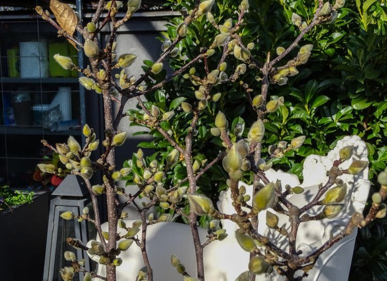 2015 11 08 terrasse zitrus 6