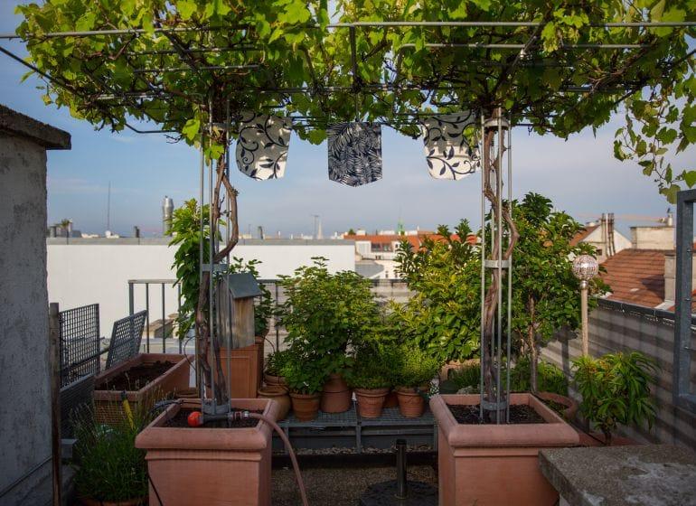 2016 05 27 bluehende terrasse 6