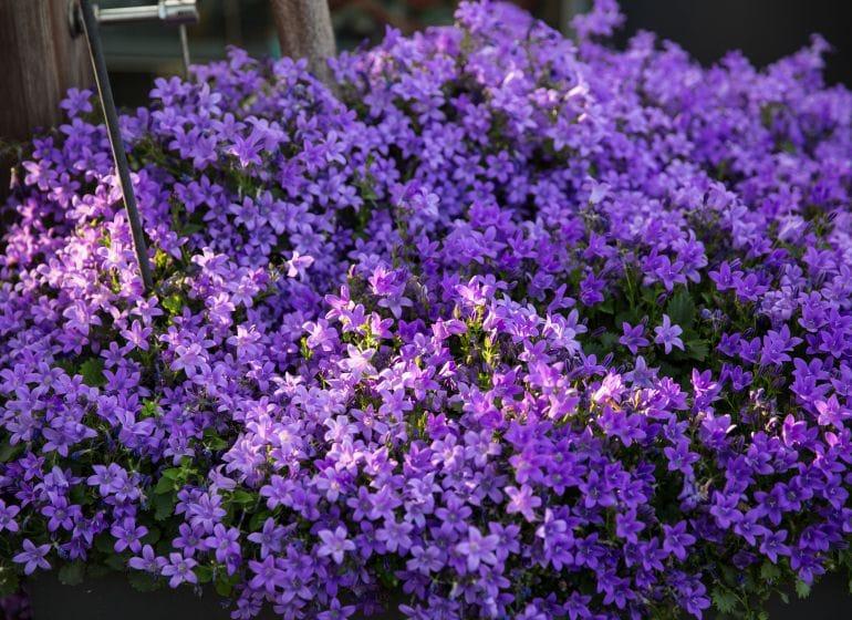 2016 05 27 bluehende terrasse 9