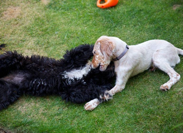 hund humpelt hinten links