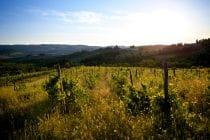2014 06 01 tuscany 239