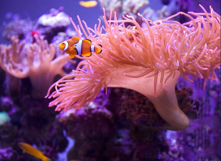 2014 07 22 anemone