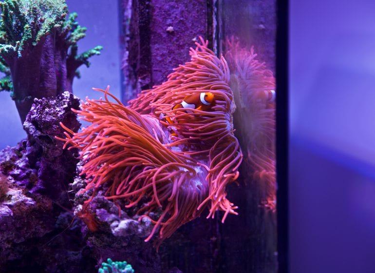 2015 01 18 aquarium