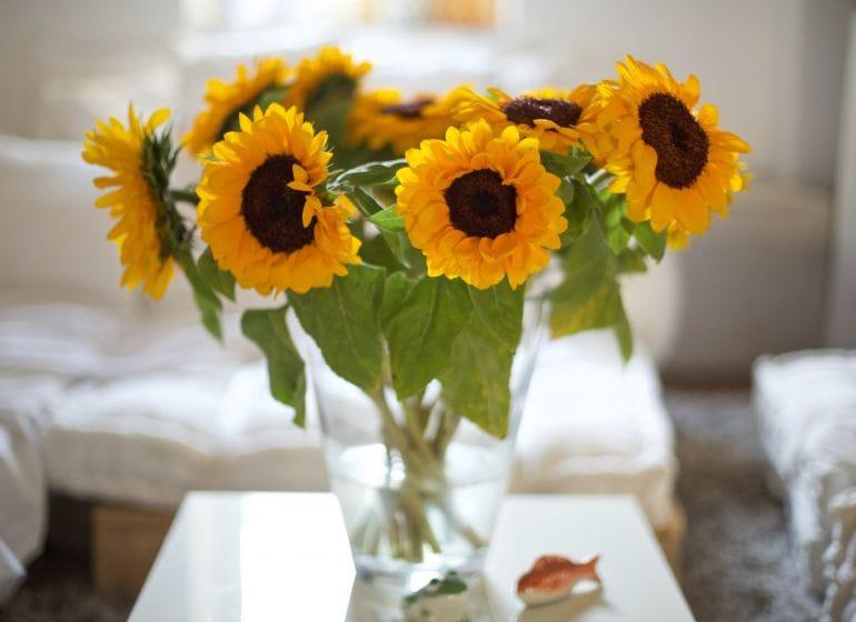 2015 07 11 sonnenblumen 4