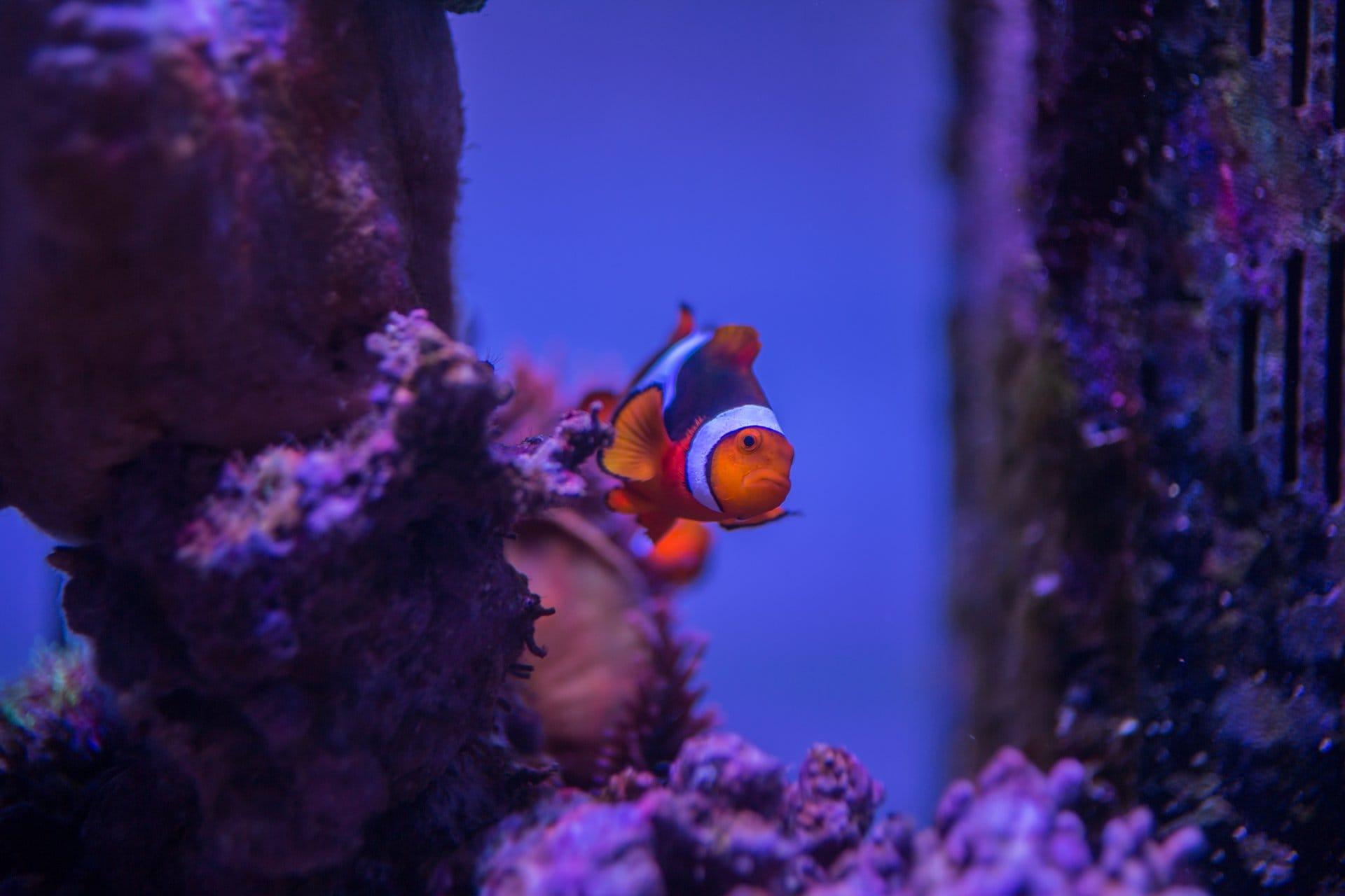 2016 01 09 aquarium 1