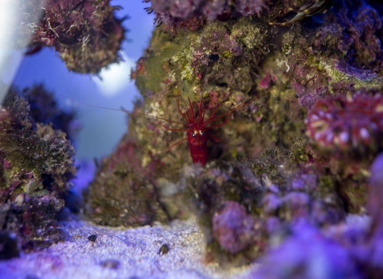 2016 01 09 aquarium 4