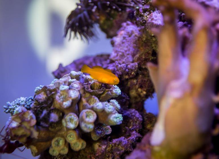 2016 01 09 aquarium 7